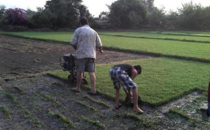 Produccion de pasto en rollo natural